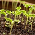 Живлення та захист рослин
